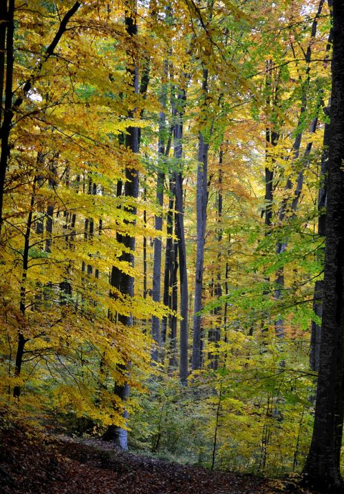 autumn trees forest