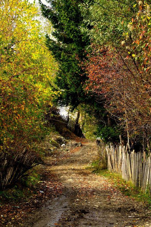 autumn falls leaves