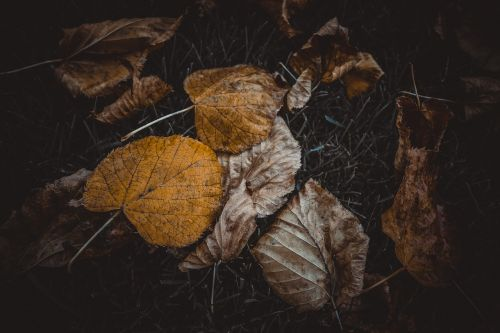 ruduo,kritimas,lapai,gamta,geltona,lapai,oranžinė,sezonas,raudona,kritimo lapai,spalvinga,rudens lapai,klevas,Spalio mėn,miškas,medis,spalva,šviesus