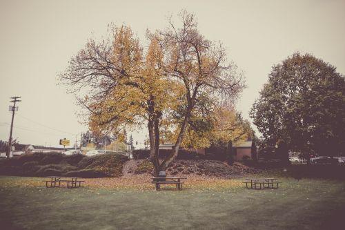 ruduo,kritimas,lapai,parkas,medžiai,žolė,žalias,stendas,gamta,geltona,lapai,oranžinė,sezonas,raudona,kritimo lapai,spalvinga,rudens lapai,klevas,Spalio mėn,miškas,medis,spalva,šviesus