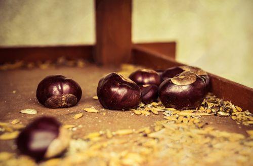autumn beginning chestnut brown