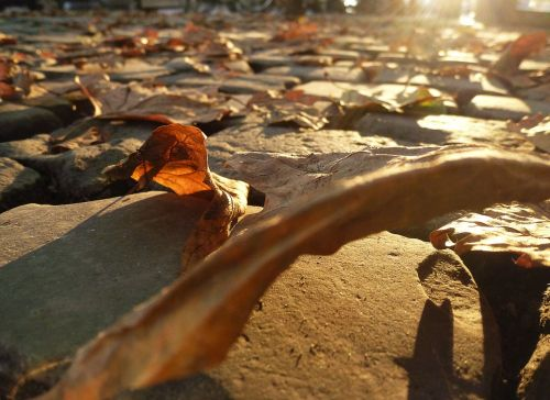 autumn beginning true leaves road