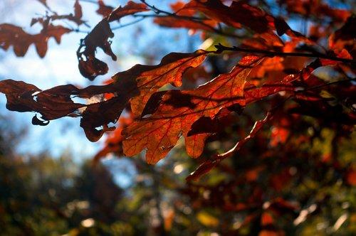 autumn color  leaves  autumn