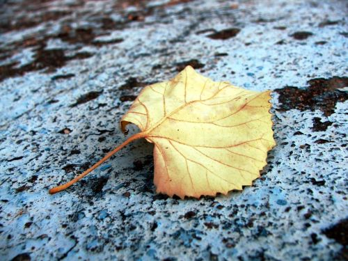 autumn colours leaf fall color