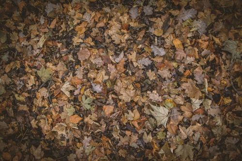 autumn colours autumn leaves autumnal