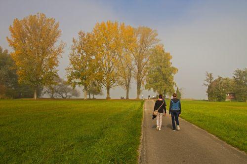 autumn day autumn morning fog