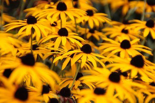 autumn flowers autumn flowers