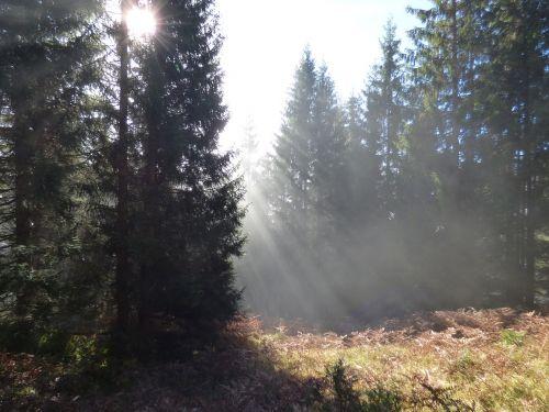 autumn forest passauer hut leogang