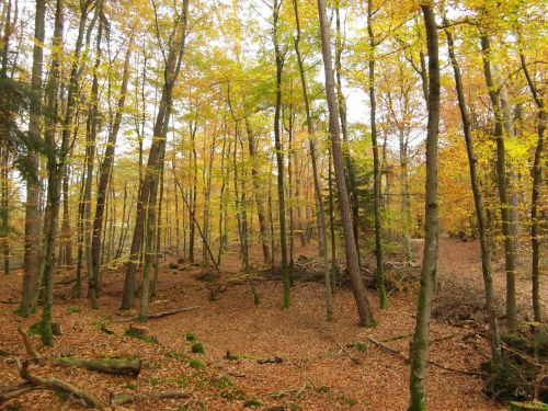 autumn forest trees emerge