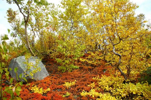 autumn forest mountains fall colors