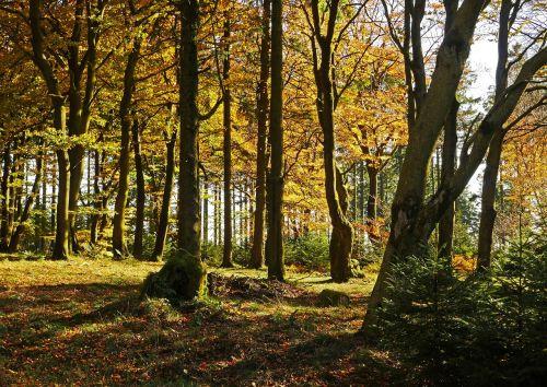 autumn forest the ebbe mountains sauerland