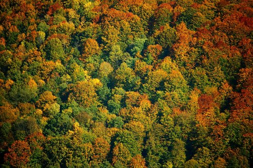 autumn forest  colored leaves  autumn colours