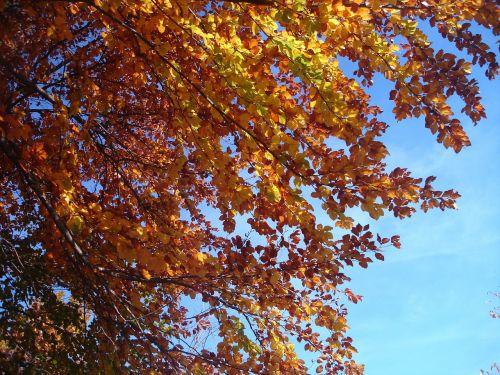 autumn forest autumn forest