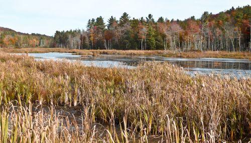 ruduo, kritimas, lapija, upė, Vermont, kraštovaizdis, rudens kraštovaizdis