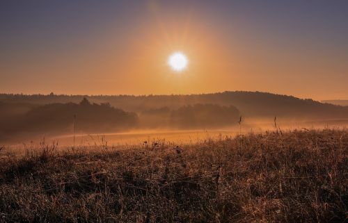 autumn landscape sunlight critter