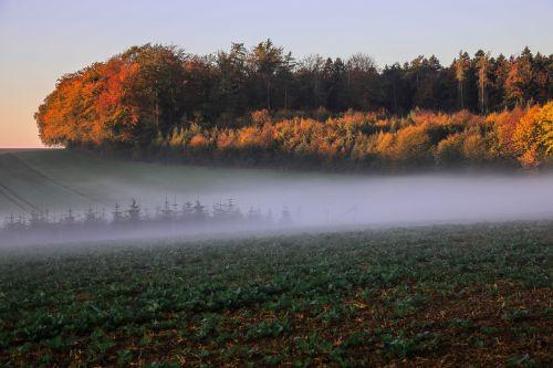 autumn landscape trees fall foliage