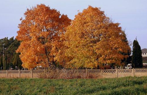 autumn landscape  trees autumn  landscape