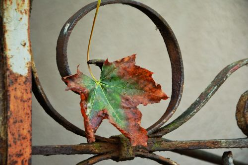 autumn leaf maple leaf withered