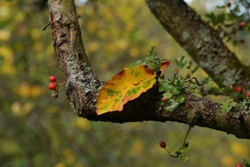 autumn leaf autumn colours fall color
