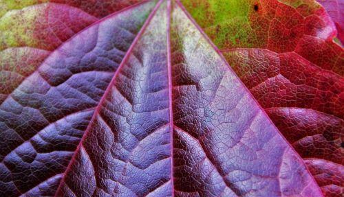 autumn leaf partial view autumn colours