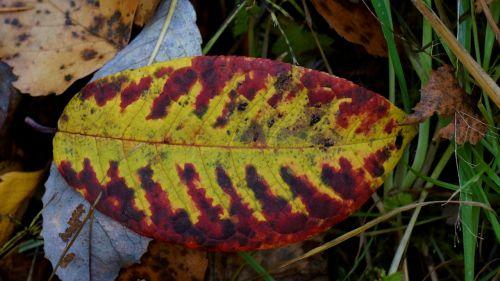 autumn leaf colorful dropped