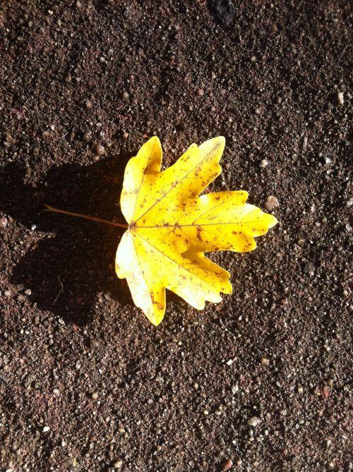 autumn leaf yellow symmetrical