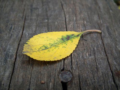 autumn leaf sheet autumn