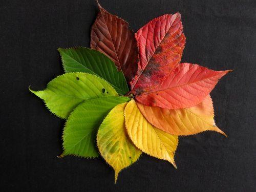 rudens lapai,kritimo lapai,ruduo,lapai,lapai,spalva,spalvinga,ratas