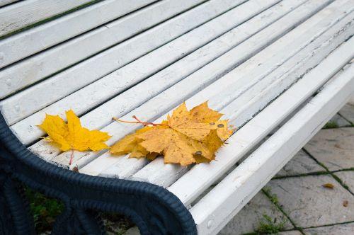 autumn leaves park bench