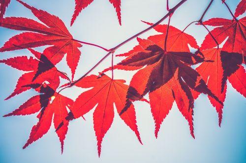autumn leaves beautiful close-up