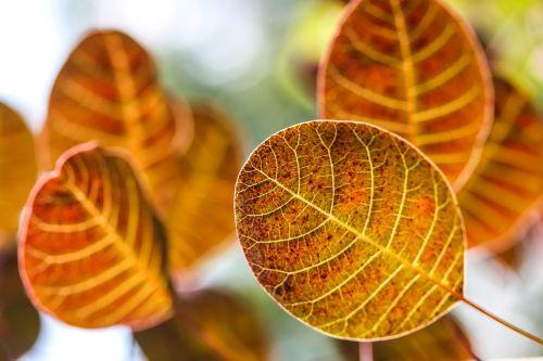 autumn leaves autumn autumn lights