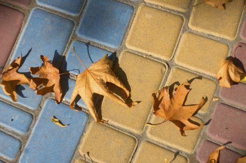 autumn leaves pavement listopad