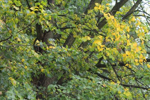 autumn leaves colors of autumn foliage
