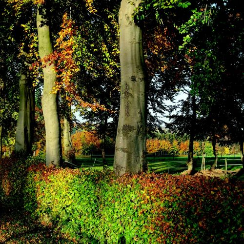 autumn mood light formerly