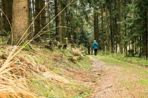 autumn mood walk autumn