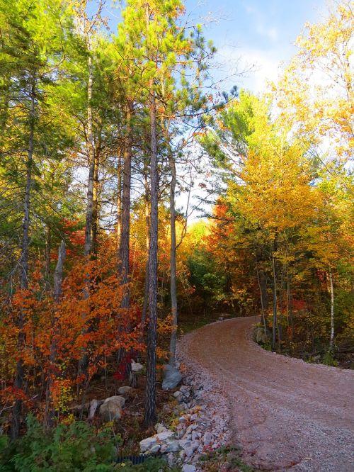 rudens kelias,kelias,kraštovaizdis,kritimas,miškas,sezonas,kelias,medis,vaizdingas,lauke,lapai