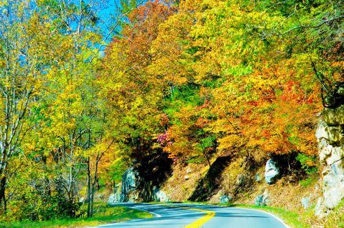Autumn Season Road