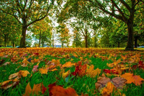 Autumn Seasons