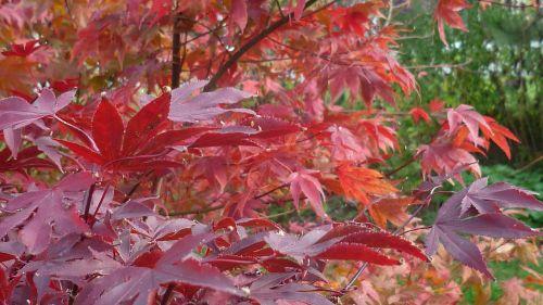 autumn splendor branches beautiful