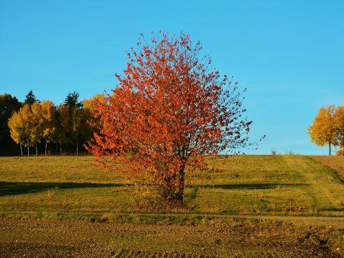 autumn tree autumn landscape