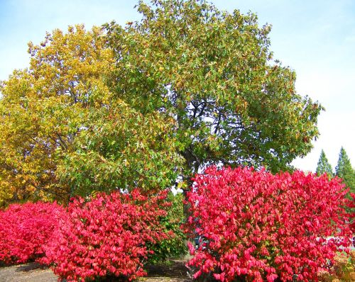 Autumn Trees And Bushes