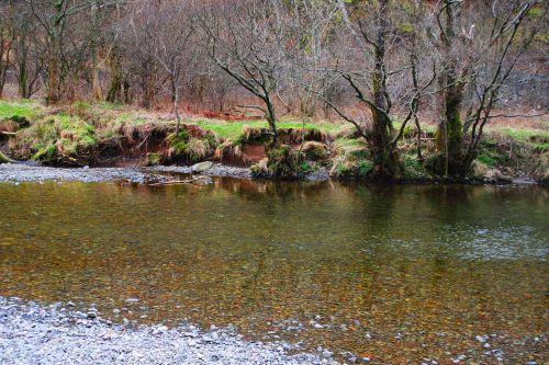 ruduo, medžiai, upė, gamta, kraštovaizdis, rudens medžiai prie upės