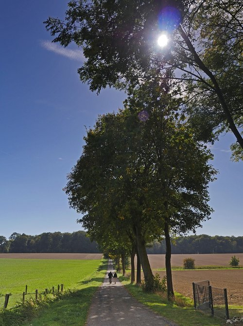 autumn walk  lane  landscape