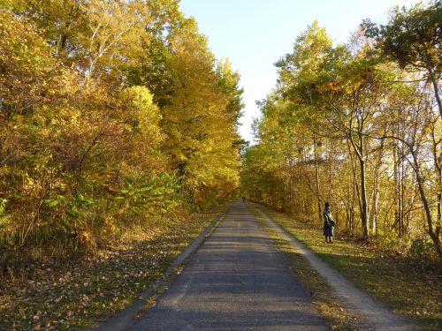 Autumn Walking Path