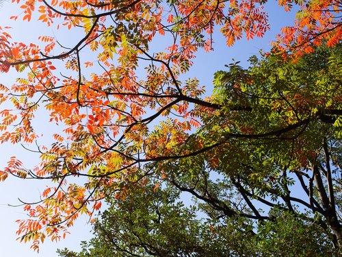 autumnal leaves  sky  leaf