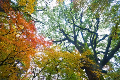 autumnal leaves  autumn  the fall colors