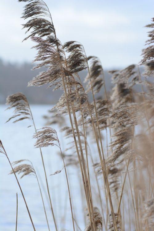 autumnalis background baltic