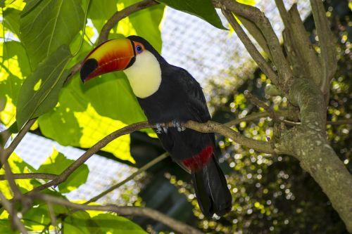 ave tropical animal
