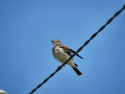 ave  bird  centered