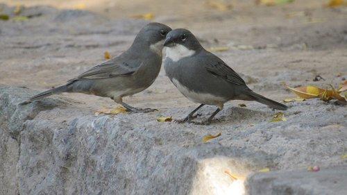 ave  birds  animal